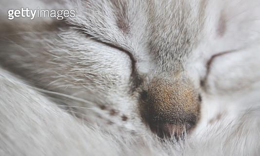 Sleeping kitten - gettyimageskorea