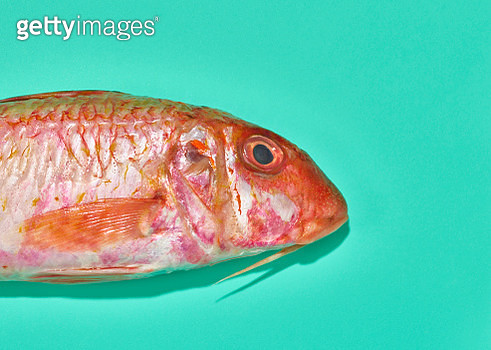 Fish over a bright green background - gettyimageskorea