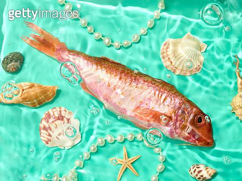 Underwater Fish Shells and Pearls - gettyimageskorea