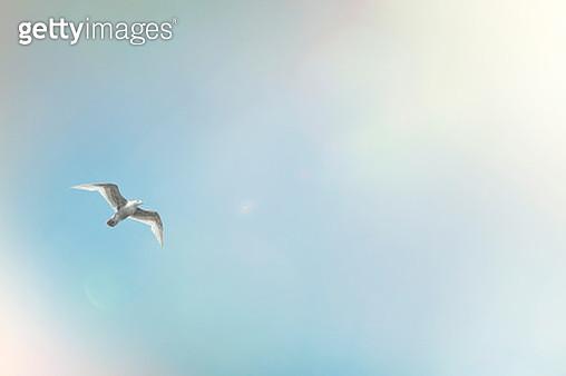 seagull mid flight on blue sky and sun flare - gettyimageskorea