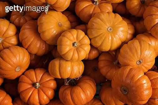 Mini pumpkins - gettyimageskorea