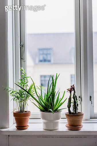 Potted Plants On Window Sill At Home - gettyimageskorea