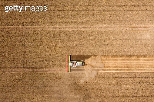 Harvester harvests wheat on a field, Thuringia, Germany - gettyimageskorea