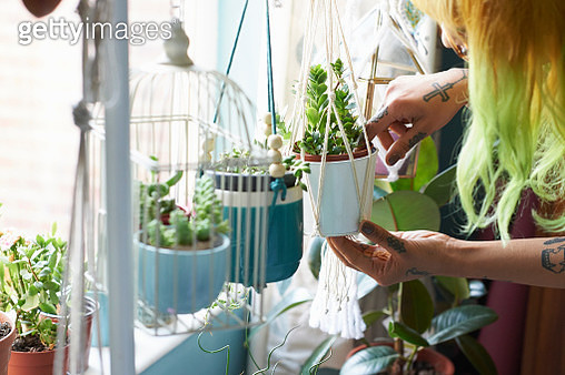 Young hipster woman tending to her succulent house plants - gettyimageskorea