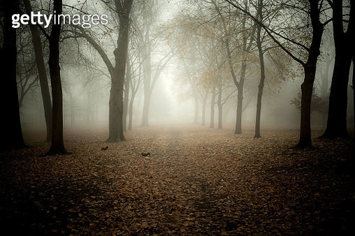 fog in the park - gettyimageskorea