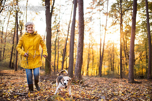 Senior Woman With Dog On A Walk In An Autumn Forest. - gettyimageskorea