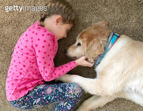 Young girl petting an old Golden Retriever dog - gettyimageskorea