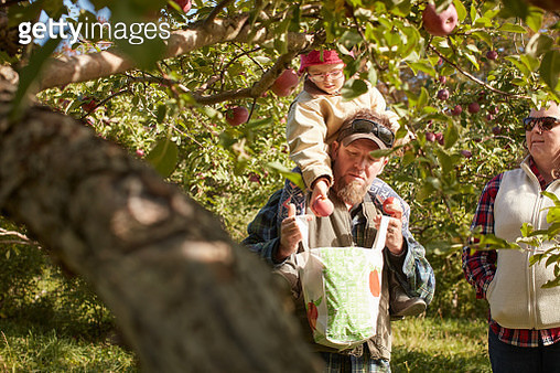 Father and daughter picking apples from tree - gettyimageskorea
