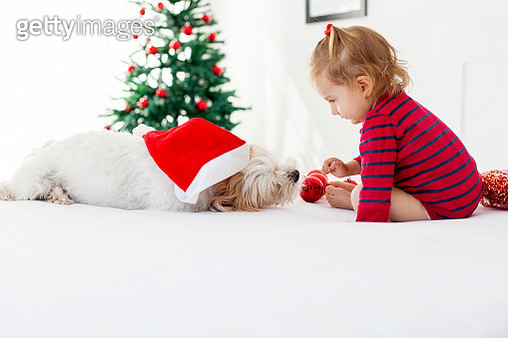 cute girl having fun with her dog for Christmas - gettyimageskorea