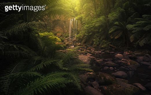 Beautiful waterfall, stream and lush undergrowth in Victoria, Australia - gettyimageskorea