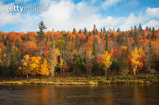BBeautiful Fall colors along the Sentier Nepisiguit Mi'gmaq Trail, New Brunswick, Canada - gettyimageskorea