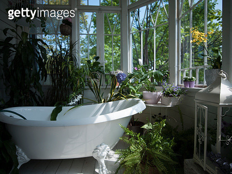 Bathtub in bathroom filled with plants, still life - gettyimageskorea