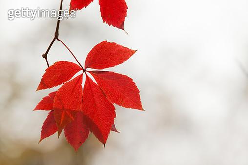 Red Autumn - gettyimageskorea