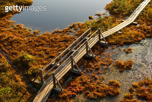 High Angle View Of Bridge Over Road By Trees - gettyimageskorea