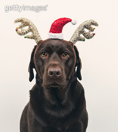 Dog in festive hat - gettyimageskorea