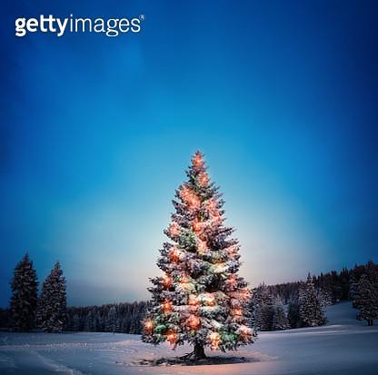 Christmas Tree - gettyimageskorea