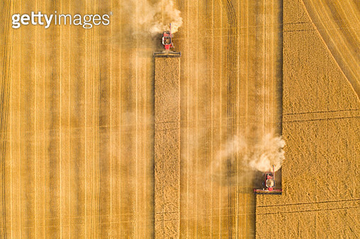An aerial view / drone image of two combines cutting and processing wheat. - gettyimageskorea