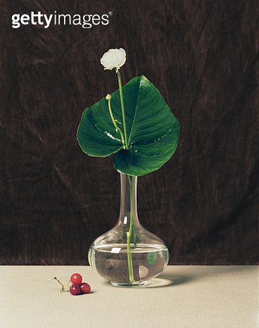 Still life of flower in vase - gettyimageskorea