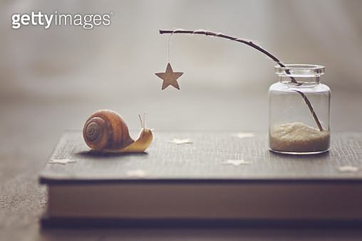 The snail and the star - gettyimageskorea