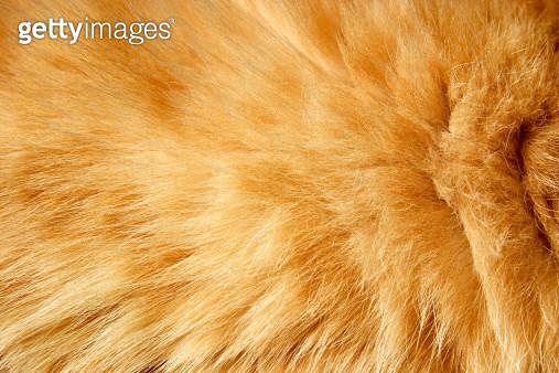 Fur texture - gettyimageskorea