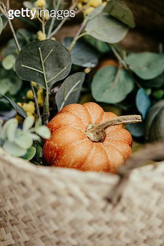 happy thanksgiving pumpkin - gettyimageskorea