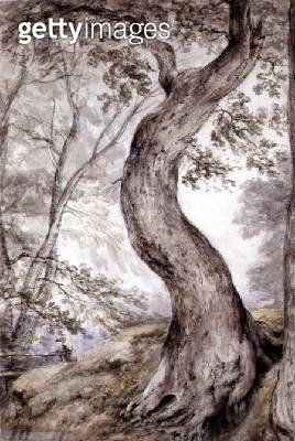 <b>Title</b> : Tree at Helmingham, c.1800 (w/c on paper)<br><b>Medium</b> : watercolour on paper<br><b>Location</b> : Leeds Museums and Art Galleries (Temple Newsam House) UK<br> - gettyimageskorea