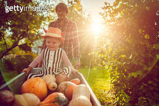 Cute boy and his father with pumpkins in autumn - gettyimageskorea