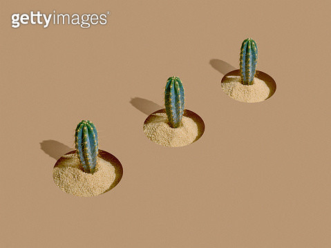 Three cactus aligned over a brown background - gettyimageskorea