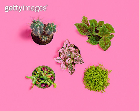 A group of 5 plants over a pink background. - gettyimageskorea