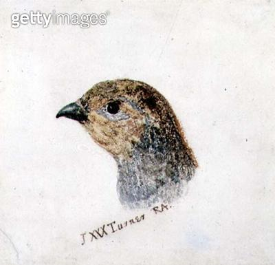 <b>Title</b> : Partridge, from The Farnley Book of Birds, c.1816 (pencil and w/c on paper)<br><b>Medium</b> : pencil and watercolour on paper<br><b>Location</b> : Leeds Museums and Galleries (City Art Gallery) U.K.<br> - gettyimageskorea