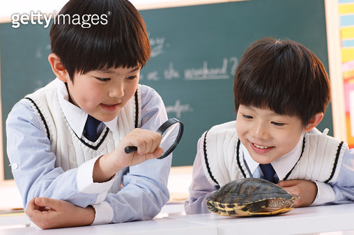 The tortoise elementary school students in the classroom observation - gettyimageskorea