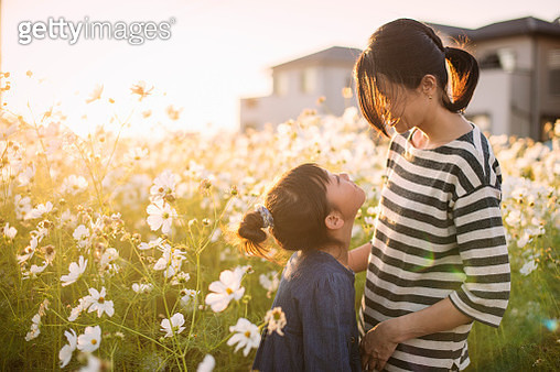 Sunset time,Mother and daughter with Cosmos flowers,Girl of 7 years old,Japanese family,Japan - gettyimageskorea