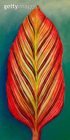 Kanna red leaf - gettyimageskorea