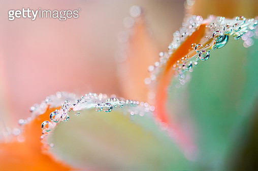 Flower underwater with oxygen bubbles on the petals. - gettyimageskorea