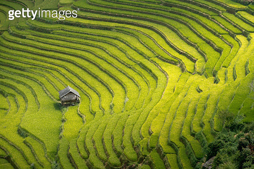 Rice terraces in Mu Cang Chai, North Vietnam - gettyimageskorea
