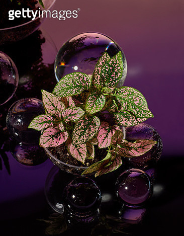 Plant in soil with crystal balls in pink and purple - gettyimageskorea