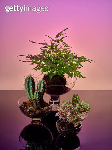 Different plants in soil representing different ecosystems - gettyimageskorea