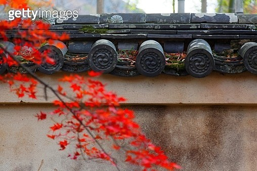 Close-up view of a fiery maple tree by a mottled wall with tiled eaves of Japanese style by a public park with autumn foliage in Arashiyama, Kyoto, Japan, in a peaceful atmosphere - gettyimageskorea