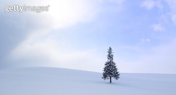홋카이도 겨울 풍경 - gettyimageskorea