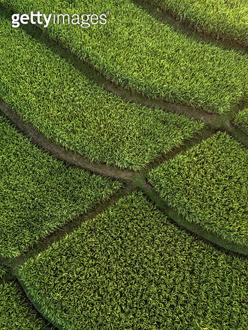 Indonesia, Bali, Aerial view of rice fields - gettyimageskorea