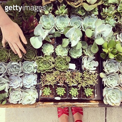 Shopping for Succulents - gettyimageskorea