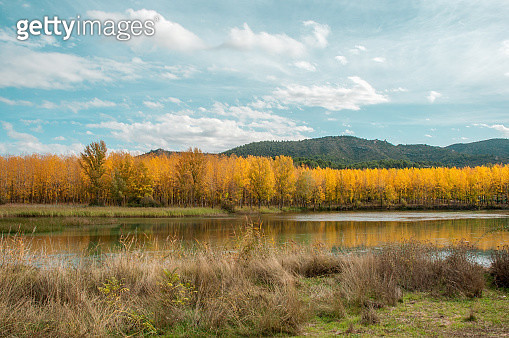 Autumn Trees by the Tagus River - gettyimageskorea
