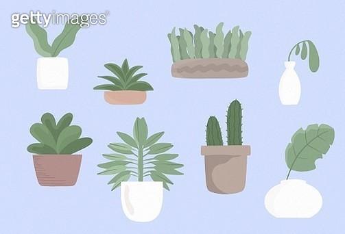 gardening, plant, leaf, green, room, room decoration, home decoration, healthy living, succulents, interior. - gettyimageskorea