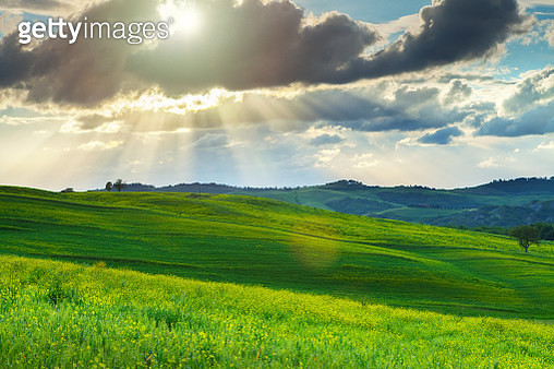 Green hills in Tuscany, Italy - gettyimageskorea