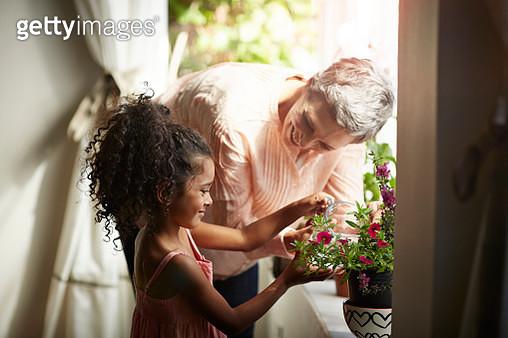 Grandmother helping granddaughter watering plant - gettyimageskorea