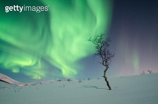 Lonely winter tree - gettyimageskorea