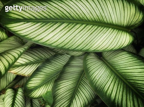 Directly Above Shot Of Plant - gettyimageskorea
