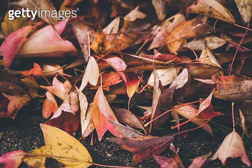 Autumn leaves - gettyimageskorea