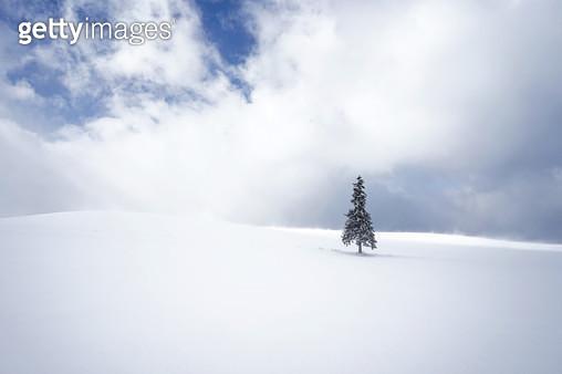 눈내린 일본 비에이의 크리스마스트리 - gettyimageskorea