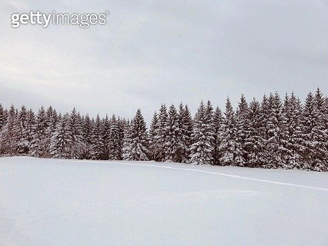Trees On Snow Covered Field Against Sky - gettyimageskorea